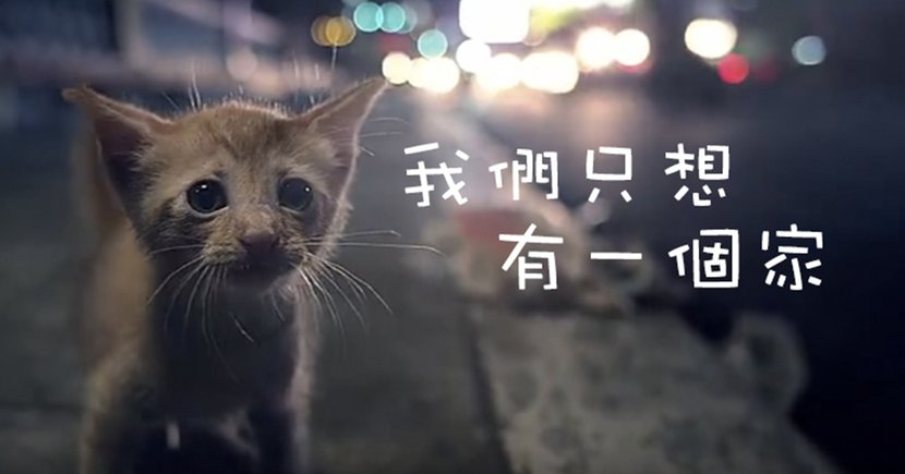 【影片】準備紙巾!超催淚流浪貓貓⋯你能做的10件事!