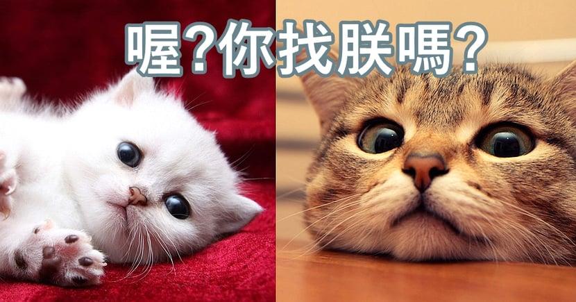 想貓貓記住自己的名字~貓奴必學的3大技巧,主子便知道你在叫牠了!