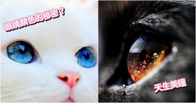 貓咪小知識!為什麼貓咪眼睛有這麼多種顏色?關於 天生美瞳 的 6 個秘密!