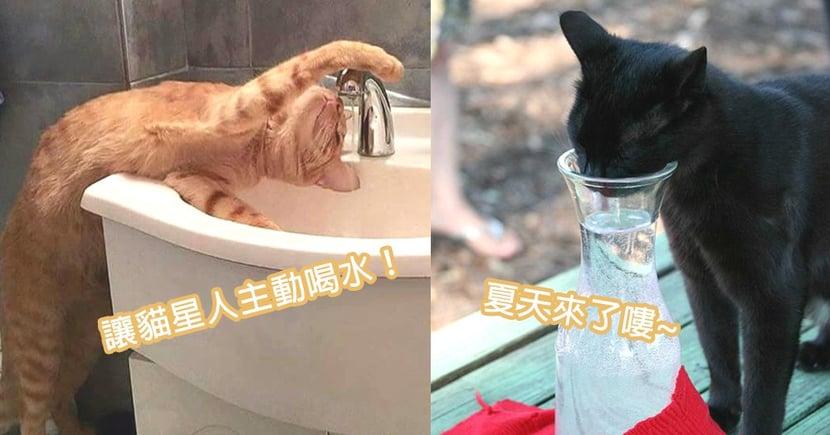 夏天讓奴才很煩惱!3個毛孩們輕鬆有效補水方法,讓貓星人主動來喝水喔~