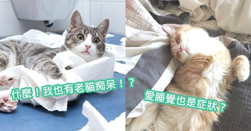 外貌凍齡實際正在退化!「老貓癡呆症」7大徵兆,貓星人也需要好好呵護~