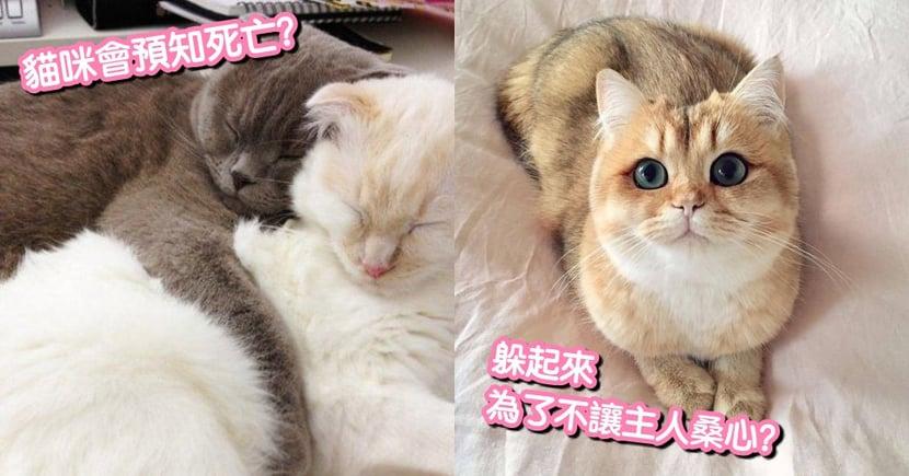【貓咪小知識】貓咪去世前,躲起來是為了不讓你桑心?事實的真相是...獸醫這麼說!