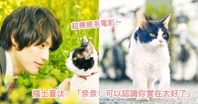 準備哭好哭滿!療癒系電影《旅貓日記》福士蒼汰化身暖男貓奴,與貓貓展開一場感人旅程!
