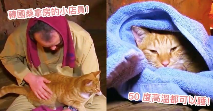 來spa還有貓陪坐!韓國橘貓最愛把『桑拿房』當睡窩,50 度高溫也照樣呼呼大睡!網:立刻揪團去~
