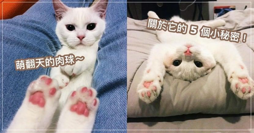 專業貓奴來挑戰!除了賣萌之外,關於貓肉球的 5 個秘密,你知道多少呢?!