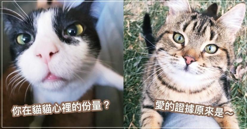 你在貓咪心裡的份量有多重?原來這 10 項行為,竟是鐵證如山「愛的證據」!!