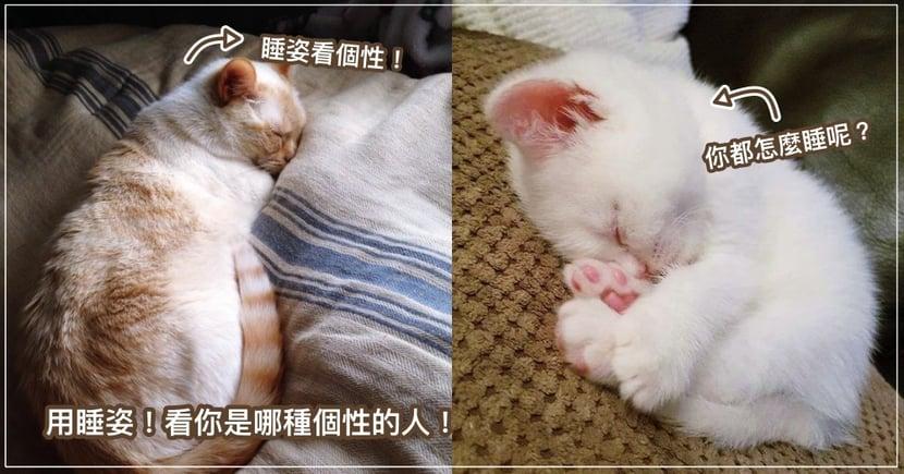 「你跟貓越來越像了!」居然有真實根據?!用 5 種「睡姿」測驗,揭曉你是哪種個性的貓!