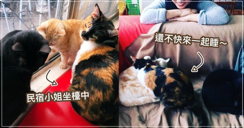 住民宿還附小姐?中山區「貓咪公寓」3 隻萌貓坐檯,絕對讓你捨不得離開!