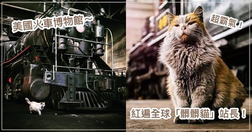 越髒越可愛!美國火車博物館超吸睛「髒髒貓」站長,有周邊商品還吸粉30000人朝聖!