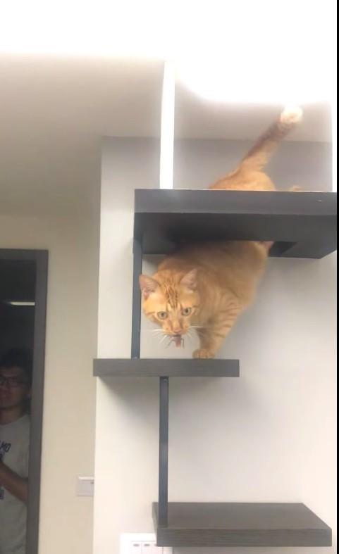 FB 膽小貓Gary同居日誌