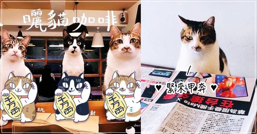 【台北貓咖啡廳】貓店長坐檯!超療癒「曬貓咖啡」溫馨空間,陪你度過悠閒午後!