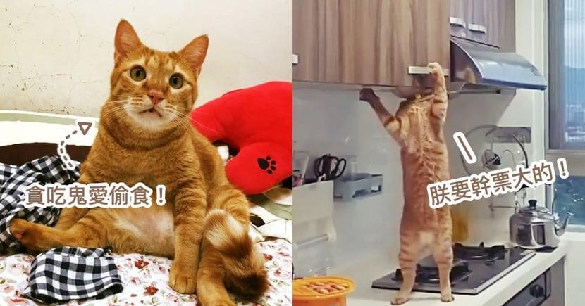 朕要幹票大的!竊賊橘貓熟練開櫃子,下秒掉出「巨大飼料包」 網驚:工讀生出來!