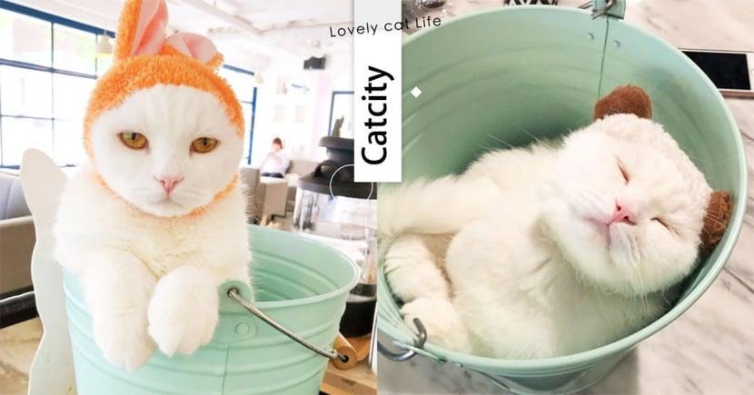 【韓國貓咖啡廳】貓奴必來!超萌喵店長「搭水桶上班」人氣爆棚,連歐巴都遜色了~