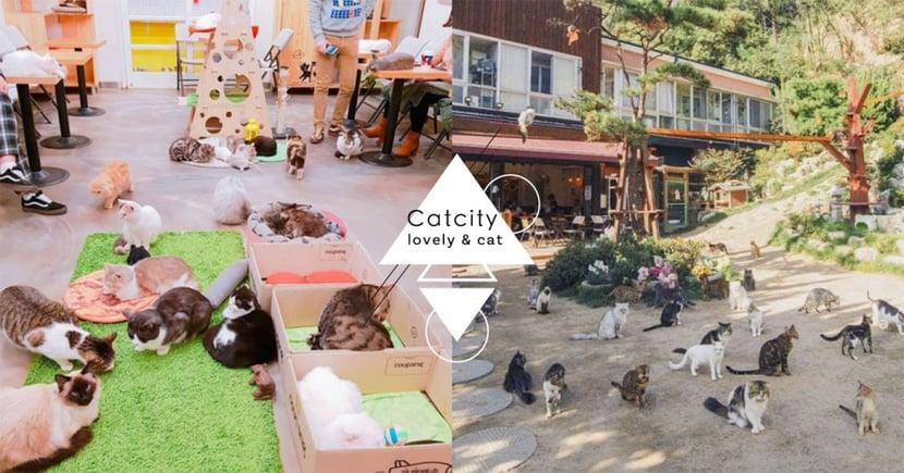 貓奴必去♥首爾野外咖啡廳「貓咪庭院」,百隻貓咪陪你坐地野餐!超幸福derrr~