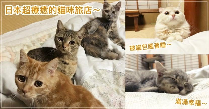 日本湯河原店超療癒的「貓咪旅館」,一群貓陪你睡覺超享受!網:根本天堂!!