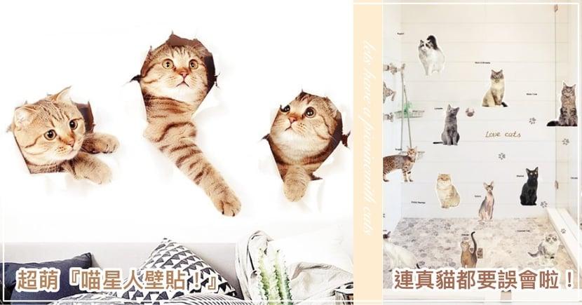 還以為牆破掉了!多款超仿真的『貓咪衝破牆壁貼』,買了小心主子爆氣揍牆啊~