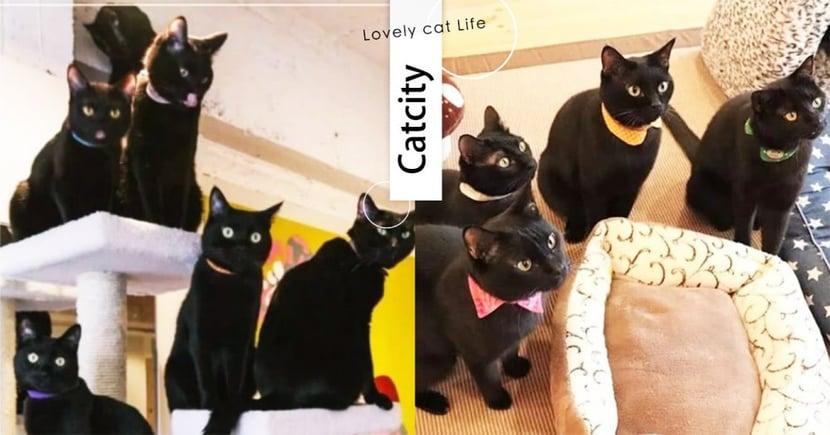 黑貓控天堂❤日本超療癒貓咖啡館,滿滿黑貓陪你度過悠閒午後!被包圍超幸福的~
