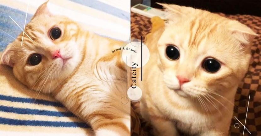 根本吃可愛長大♡超可愛橘貓「浮誇系睜眼」表情好驚訝,網笑噴:『像隱眼跑片~』