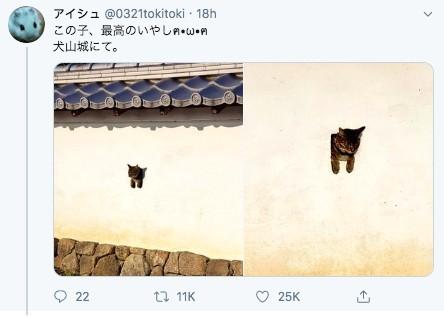 犬山城古牆長貓