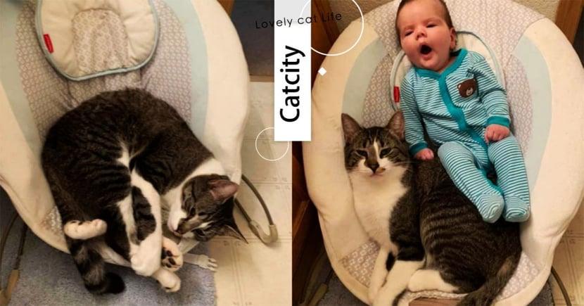 愛到堅決不讓!虎斑貓霸佔寶寶座椅,媽無奈:「只好一起坐」畫面超萌~