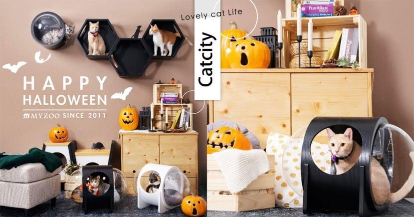 不給跳就搗蛋!絕美「黑系蜂巢貓跳台」萬聖節必備,在家也能跟貓咪歡樂過節!