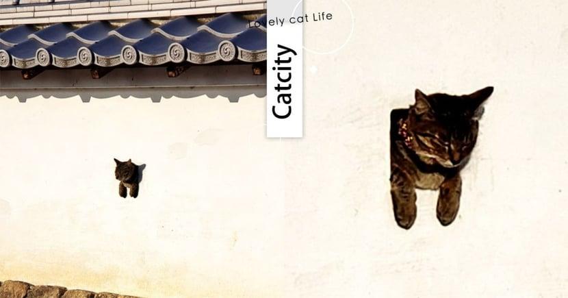 貓版島原三柴!日本犬山城驚見「牆上長貓」引熱議   網笑:要變喵山城了?