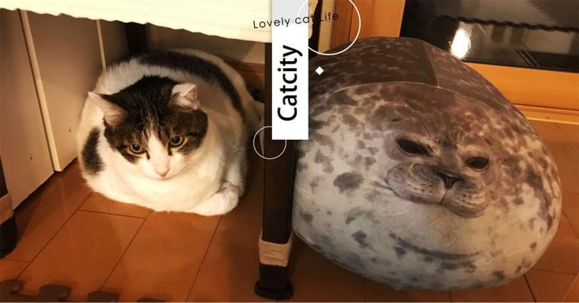 日本虎斑喵撞臉抱枕,同款「圓滾滾身材+厭世臉」笑翻網:喵海豹無誤~
