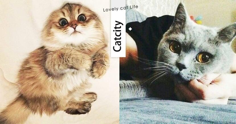 【貓行為】喵星人信任你的 7 種表現!「愛的秘密」藏在這,快來看中幾個吧~