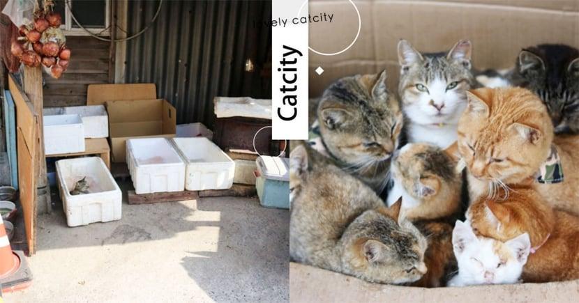 幫浪浪過冬!日本貓島居民準備「禦寒貓屋」,寒風中送暖意  網:超暖心!