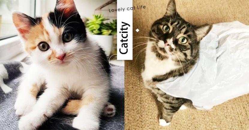【貓行為】剛清貓砂就上?超愛舔塑膠袋?令貓奴想不透的 4 種怪癖大解密!
