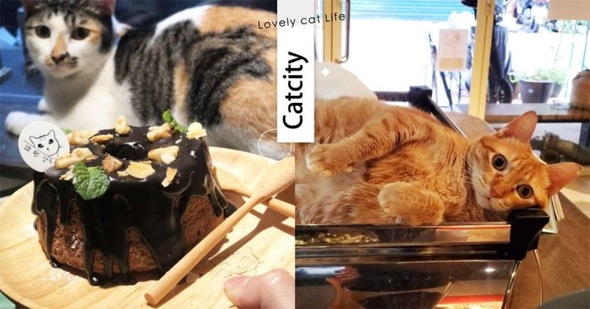 【板橋貓咖啡廳】擼貓還能玩狼人殺!「純素食咖啡廳」甜點超吸睛,胖喵店員療癒度爆表~
