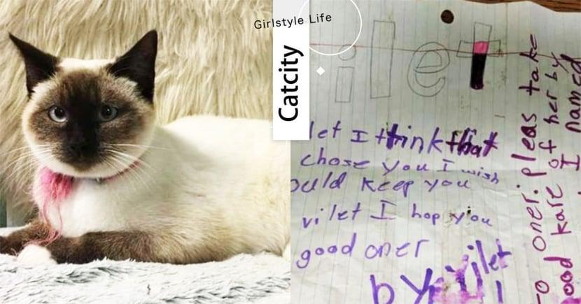 想幫愛貓找到幸福!收容所貓咪「項圈夾紙條」,志工打開看完淚噴PO文:好心疼~