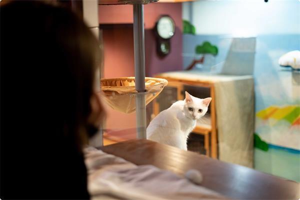 日本貓旅館