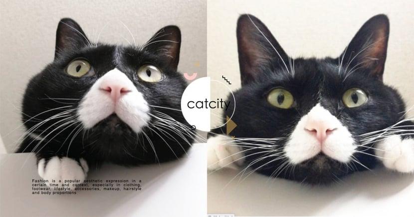 心臟爆擊!日本賓士貓「牛奶鬍+大圓臉」愛饋頭賣萌,網友笑:這熊貓吧