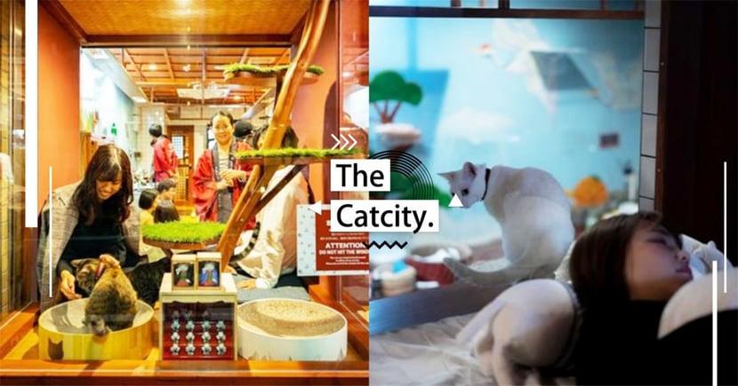跟貓一起甜甜入睡 ♡日本大阪『貓客棧』新開幕,「玻璃隔間」就算過敏人也能住~