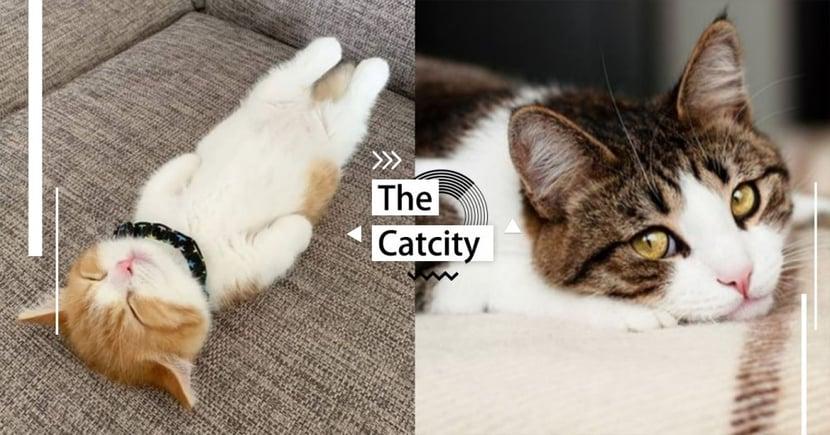 【貓行為】不喜歡被摸肚子!貓討厭的 3 種原因解析,竟『不喜歡你的氣味』在身上?