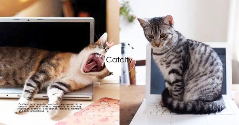 【貓行為】超礙事!喵星人愛擋在電腦前的 3 種原因,其中一點竟是牠們會『模仿主人』!
