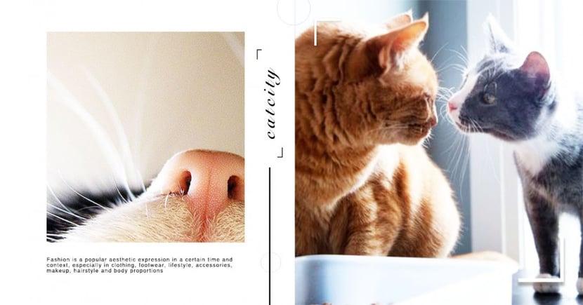 【貓怪癖】喜歡聞臭襪子?最愛當綺夢?揭秘 4 種令貓奴無法理解的詭異行為!