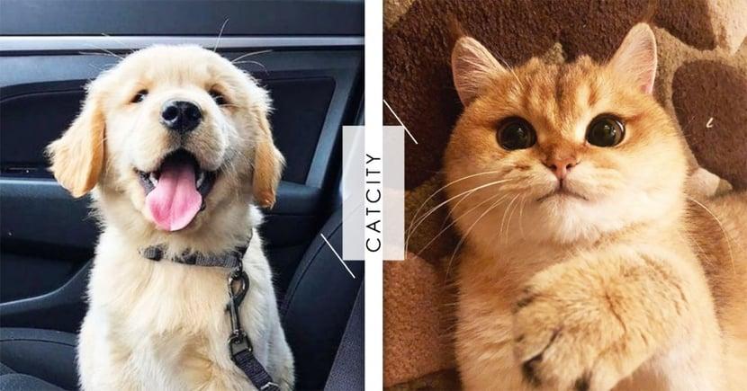 毛孩主人性格分析!喜歡狗還是貓,跟你的『個性』有關?快來一起看看準不準吧!