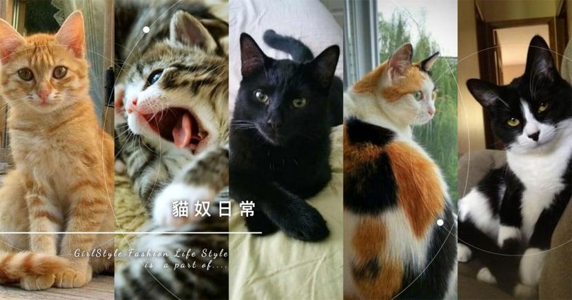 【貓知識】米克斯貓個性分析!7 種常見花色大解密,你家又是哪一種呢~
