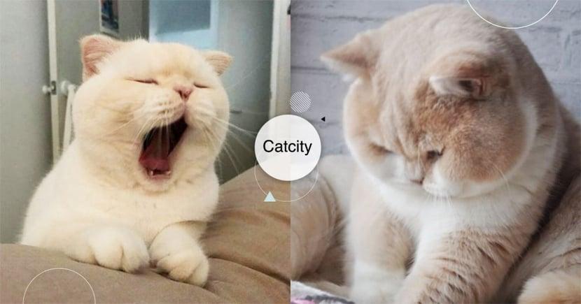 【貓行為】無法說出的抱歉!貓做錯事「5種自責表現」,其實他們不像你想的那麼冷漠!