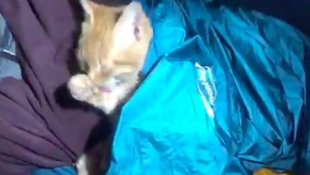 露營巧遇地痞貓幫