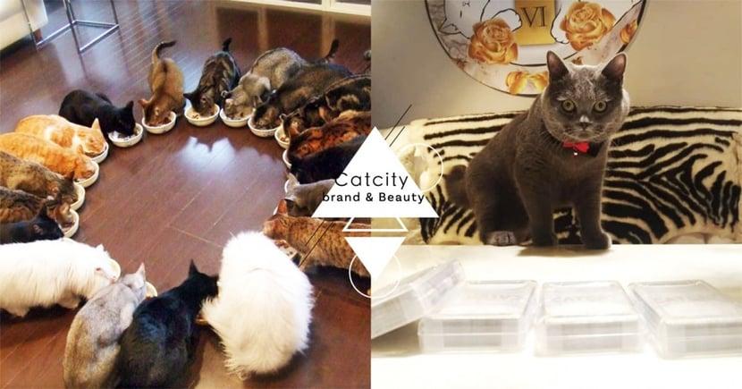 喵店長帶你玩桌遊!東區「貓咪桌遊店」披薩吃到飽、桌遊、擼貓~根本天堂啊!