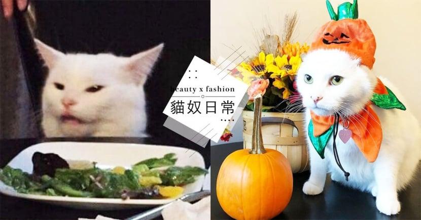 挑食梗圖爆紅!網紅貓上桌「看到青菜」秒變臉,「小眼歪嘴」超嫌棄!