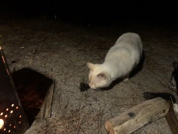 貓咪 露營