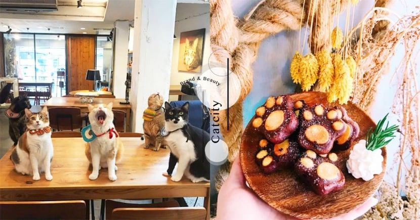 【台北】五隻喵店長坐檯!超療癒咖啡廳「大份量早午餐+不限時+大空間」根本貓奴天堂!