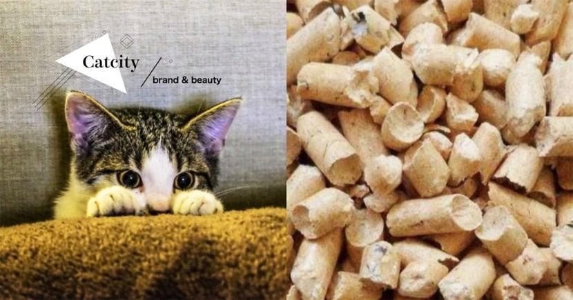 【新手養貓】2020年貓砂推薦懶人包!貓砂怎麼選?一篇教你顧荷包+選出最對貓砂!