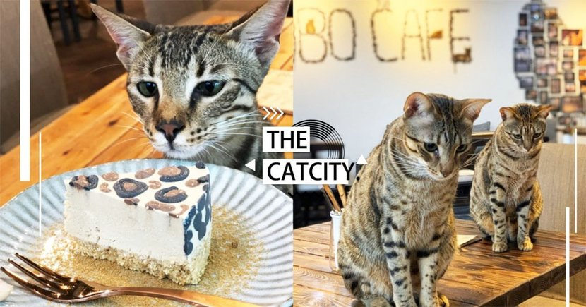 【台北】甜點是豹紋!深山絕美「豹貓咖啡館」超療癒,賞景、貓咪、點心都能一次滿足!