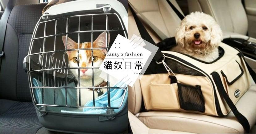 新春返鄉,怎麼帶寵物搭車?「貓狗搭乘大眾運輸規定」懶人包,奴才必知!