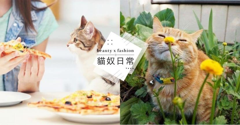 過年貓咪禁忌物品!常見 5 大新春佈置 竟會使貓中毒?連「洋蔥、百合花」都上榜!